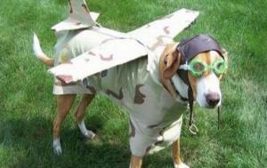 139788-airplanedog