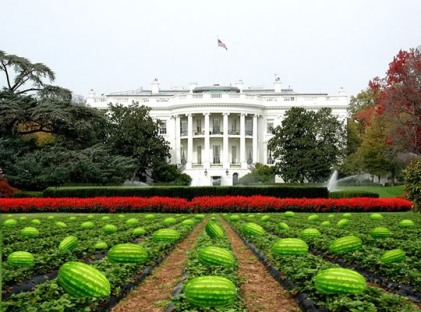 Watermelon WhiteHouse